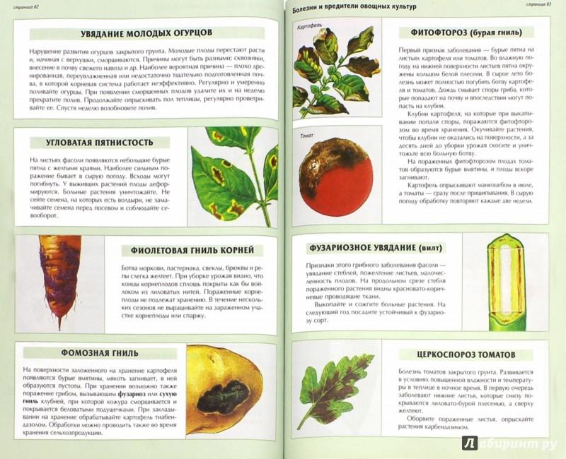 Иллюстрация 1 из 30 для Все о болезнях и вредителях растений - Дэвид Хессайон   Лабиринт - книги. Источник: Лабиринт