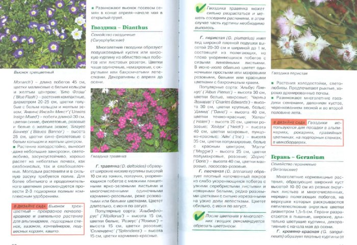 Иллюстрация 1 из 4 для Лучшие декоративные травы и почвопокровные растения в дизайне сада - Елена Колесникова | Лабиринт - книги. Источник: Лабиринт