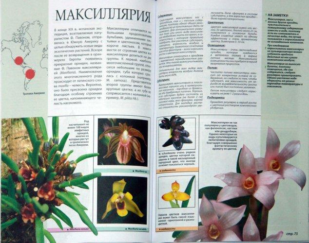 Иллюстрация 1 из 4 для Все о самых неприхотливых орхидеях - Рой Маккалистер | Лабиринт - книги. Источник: Лабиринт