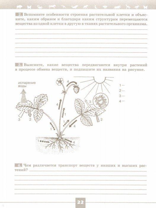 Иллюстрация 1 из 9 для Биология. 6 класс. Рабочая тетрадь - Пасечник, Калинова, Суматохин, Швецов, Гапонюк | Лабиринт - книги. Источник: Лабиринт