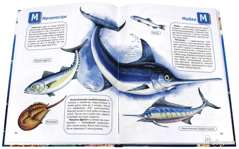 Иллюстрация 1 из 31 для Океаны и моря | Лабиринт - книги. Источник: Лабиринт