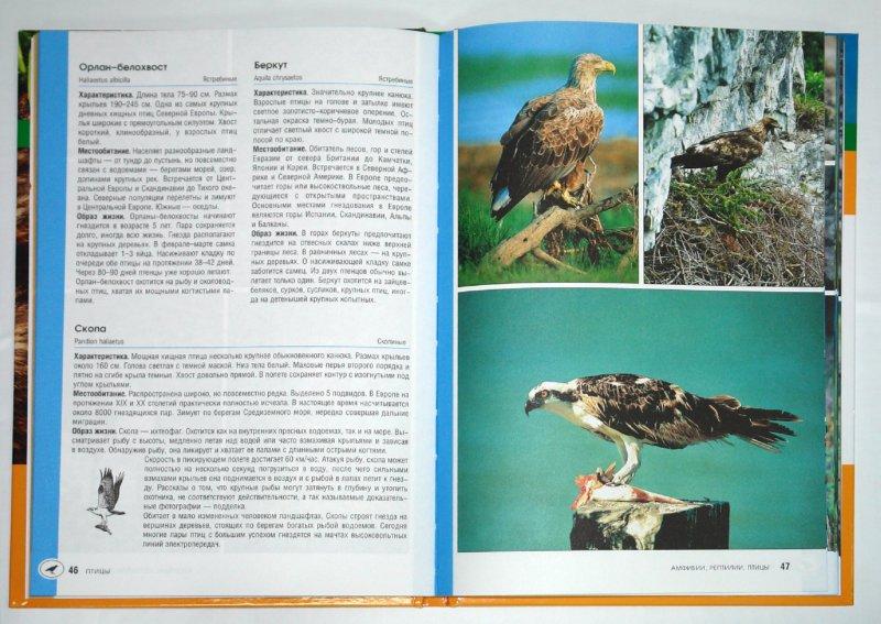 Иллюстрация 1 из 7 для Амфибии, рептилии, птицы - Клаус, Пухта | Лабиринт - книги. Источник: Лабиринт