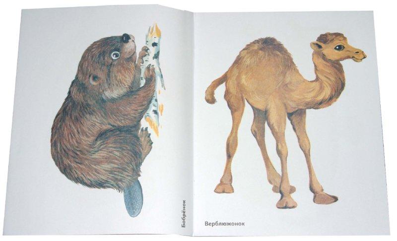 Иллюстрация 1 из 25 для Детеныши диких животных. Наглядное пособие для педагогов, логопедов, воспитателей и родителей | Лабиринт - книги. Источник: Лабиринт