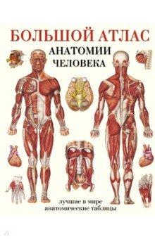 Большой атлас анатомии человека книги издательство аст большой атлас анатомии человека