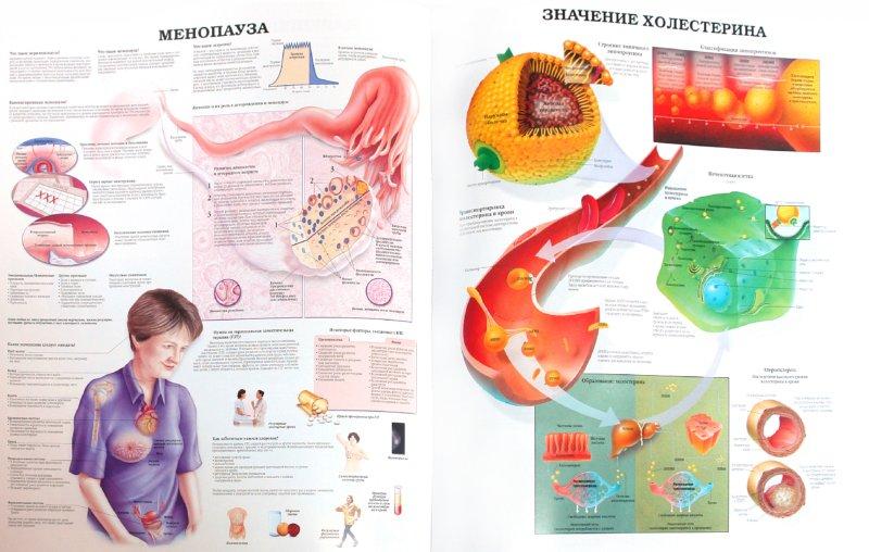 Иллюстрация 1 из 5 для Большой атлас анатомии человека | Лабиринт - книги. Источник: Лабиринт
