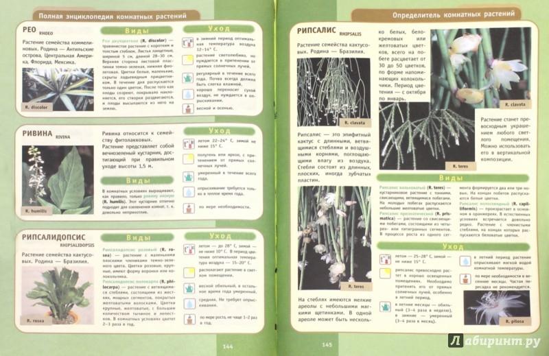 Иллюстрация 1 из 37 для Полная энциклопедия комнатных растений - Юлия Сергиенко | Лабиринт - книги. Источник: Лабиринт