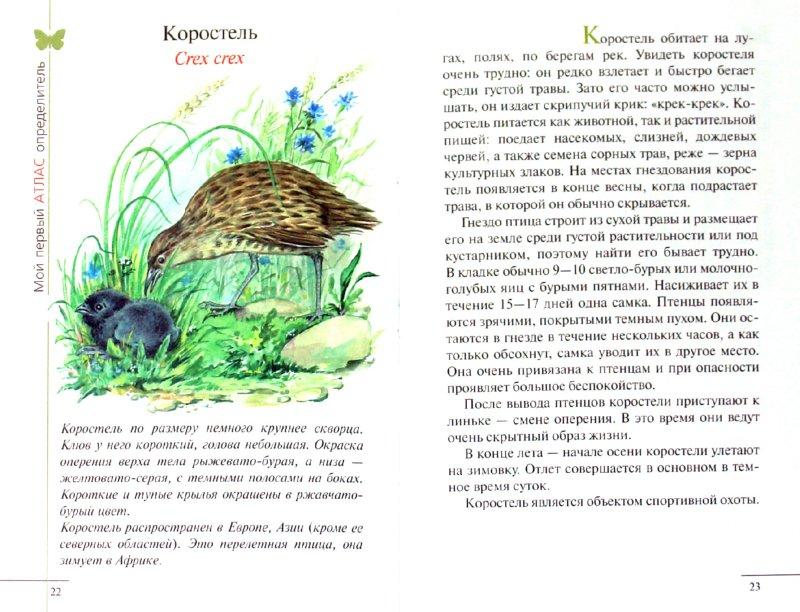 Иллюстрация 1 из 13 для Атлас: Животные луга (3906) - Бровкина, Сивоглазов | Лабиринт - книги. Источник: Лабиринт