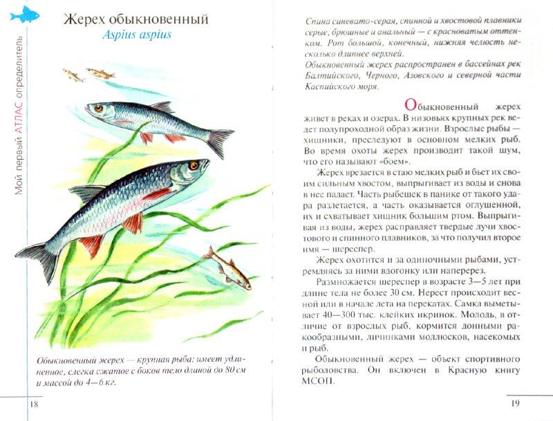 Иллюстрация 1 из 23 для Атлас. Рыбы наших водоемов (5222) - Бровкина, Сивоглазов | Лабиринт - книги. Источник: Лабиринт