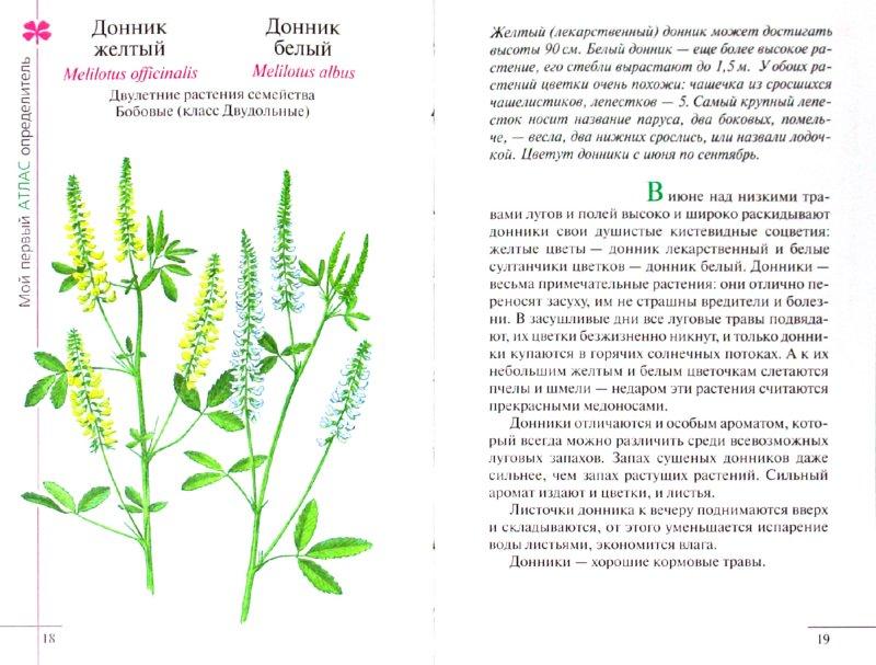 Иллюстрация 1 из 6 для Атлас: Растения луга (665) - Козлова, Сивоглазов | Лабиринт - книги. Источник: Лабиринт