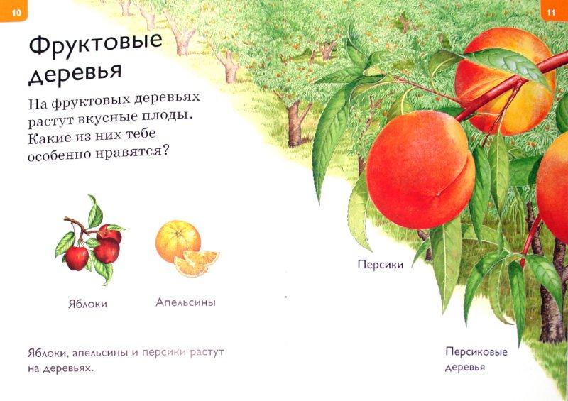 Иллюстрация 1 из 15 для Растения и грибы - Дениз Райан | Лабиринт - книги. Источник: Лабиринт