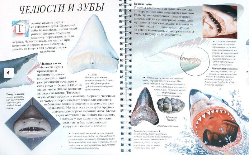 Иллюстрация 1 из 25 для Акулы - Джон Вудвард | Лабиринт - книги. Источник: Лабиринт