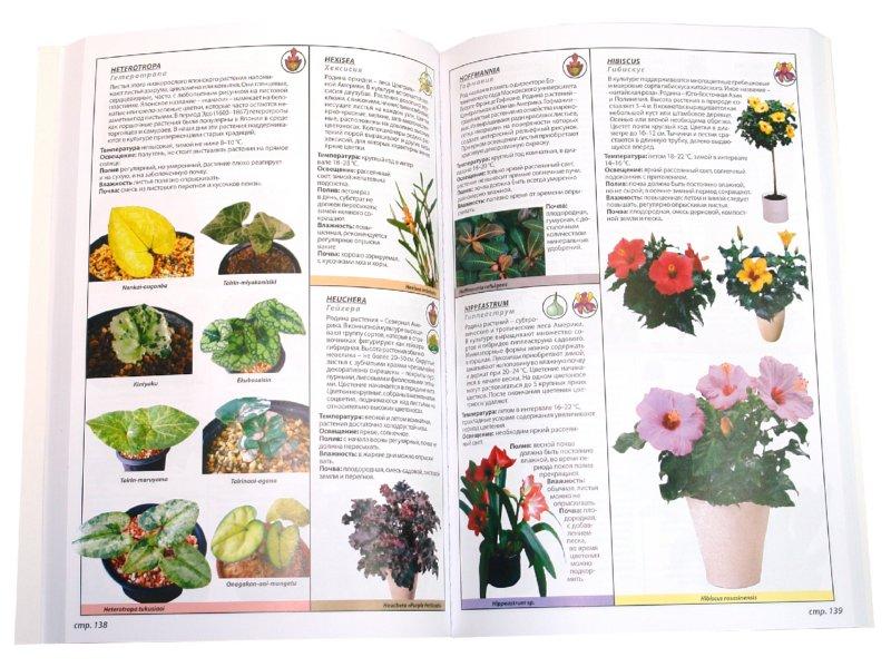 Иллюстрация 1 из 6 для Энциклопедия всех комнатных растений - Рой Маккалистер   Лабиринт - книги. Источник: Лабиринт