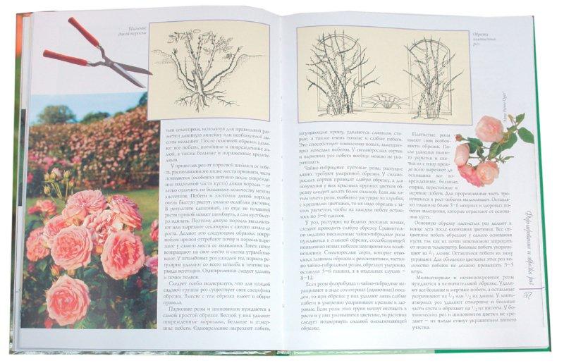 Иллюстрация 1 из 12 для Все о розах - Воронцов, Коробов | Лабиринт - книги. Источник: Лабиринт