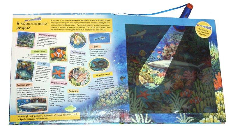 Иллюстрация 1 из 23 для Охота с фонариком: Морские животные | Лабиринт - книги. Источник: Лабиринт