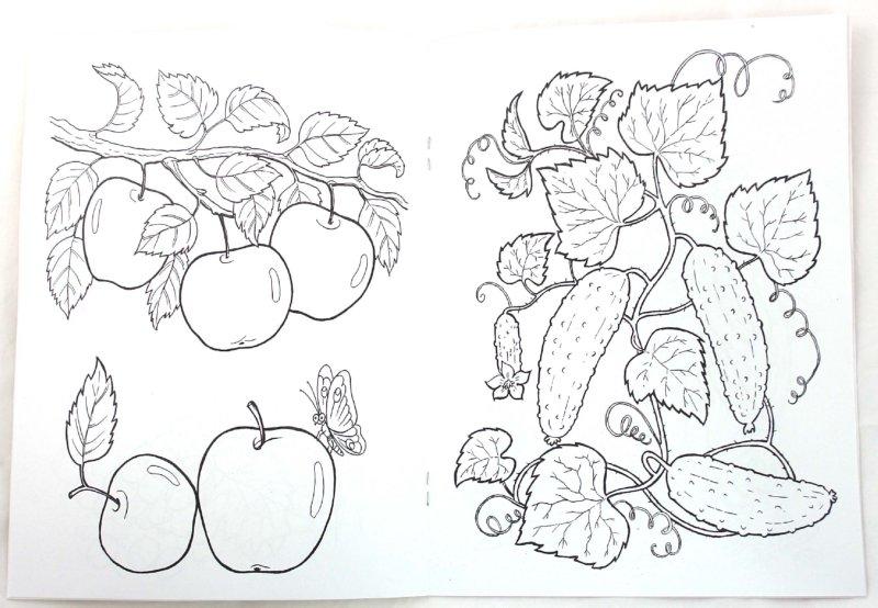 Иллюстрация 1 из 17 для Что растет в саду | Лабиринт - книги. Источник: Лабиринт