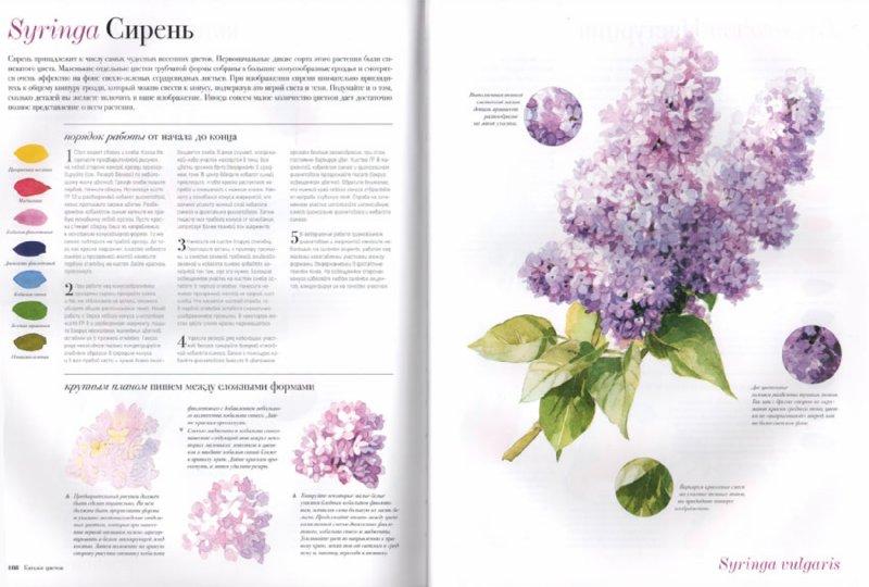 Цветы для рисования акварелью