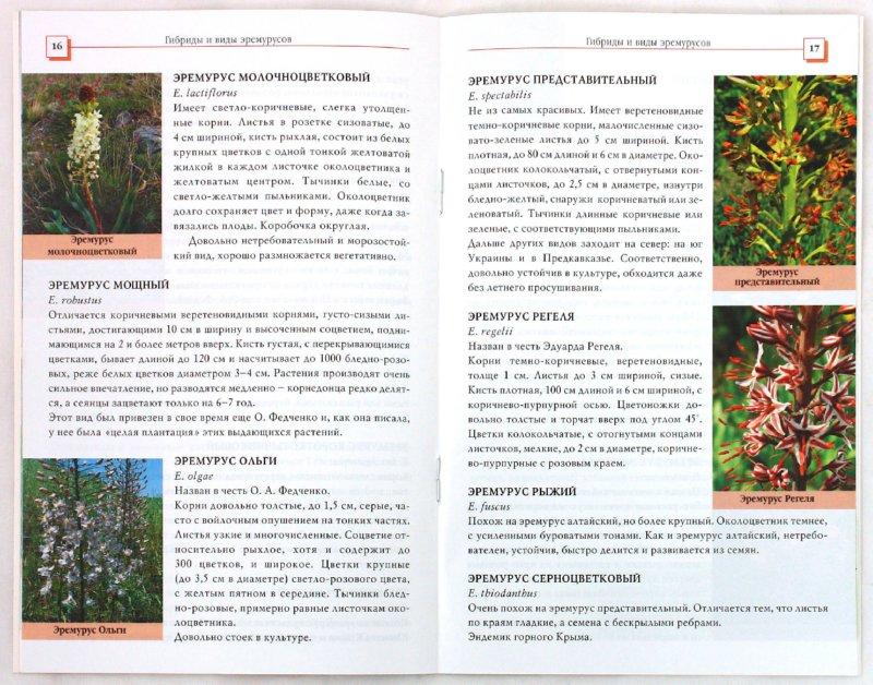 Иллюстрация 1 из 7 для Эремурусы - Коновалова, Шевырева   Лабиринт - книги. Источник: Лабиринт