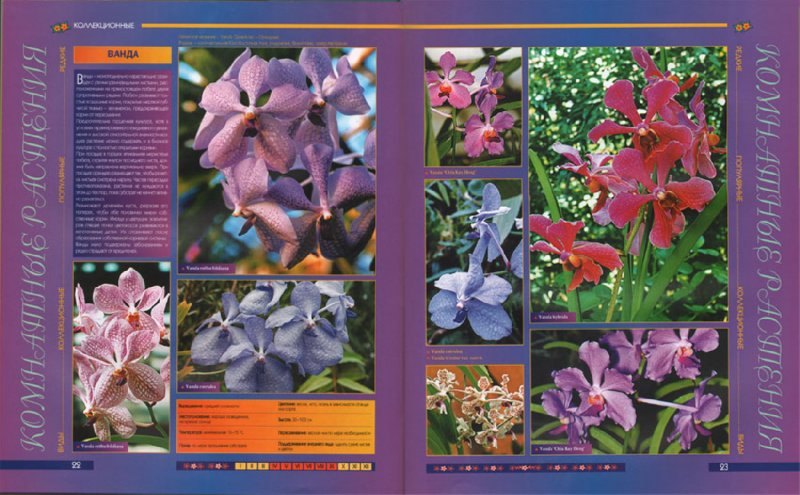 Иллюстрация 1 из 5 для Атлас комнатных растений | Лабиринт - книги. Источник: Лабиринт