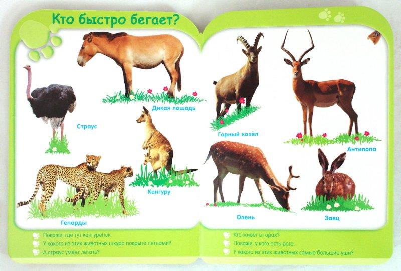 Иллюстрация 1 из 12 для Животные (от 3-х лет)   Лабиринт - книги. Источник: Лабиринт
