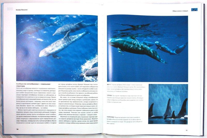 Иллюстрация 1 из 31 для Киты и дельфины. Величественные обитатели морей и океанов | Лабиринт - книги. Источник: Лабиринт