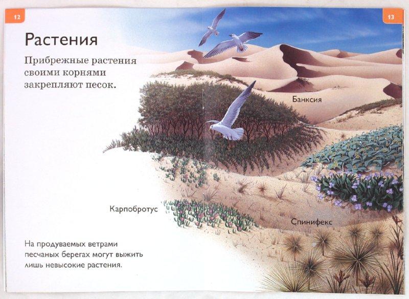 Иллюстрация 1 из 20 для Морское побережье   Лабиринт - книги. Источник: Лабиринт