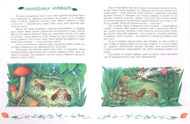 Иллюстрация 1 из 25 для Кто в муравейнике живет: книга для чтения детям - Александр Тамбиев | Лабиринт - книги. Источник: Лабиринт