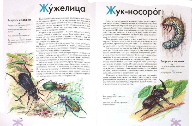 Иллюстрация 1 из 35 для Азбука. Насекомые России: книга для чтения детям - Инна Шустова | Лабиринт - книги. Источник: Лабиринт