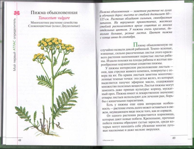 Иллюстрация 1 из 21 для Атлас: Растения луга - Козлова, Сивоглазов | Лабиринт - книги. Источник: Лабиринт