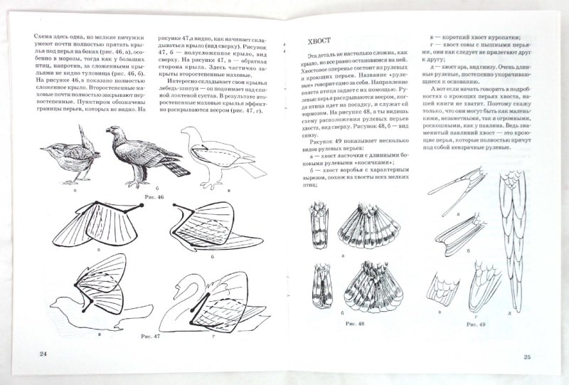 Иллюстрация 1 из 5 для Как нарисовать птицу - Наталья Рымарь | Лабиринт - книги. Источник: Лабиринт