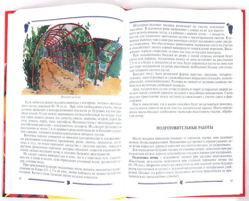 Иллюстрация 1 из 24 для Секреты садоводства. Ягоды - Ниточкина, Колбасина, Раджабов, Аладина | Лабиринт - книги. Источник: Лабиринт