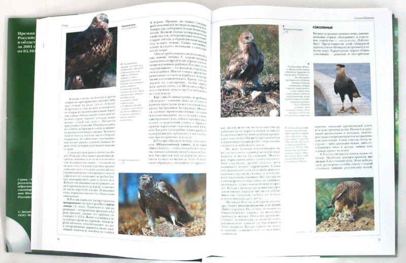 Иллюстрация 1 из 36 для Энциклопедия для детей. Птицы и звери (+CD) | Лабиринт - книги. Источник: Лабиринт