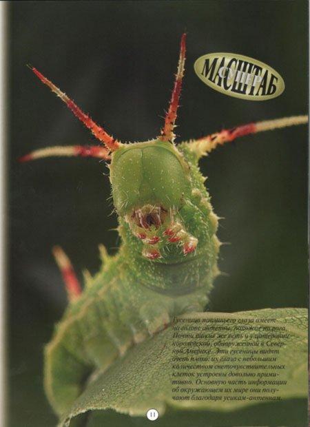 Иллюстрация 1 из 47 для Насекомые: жуки, пауки, бабочки и другие - Эндрю Дэвис   Лабиринт - книги. Источник: Лабиринт