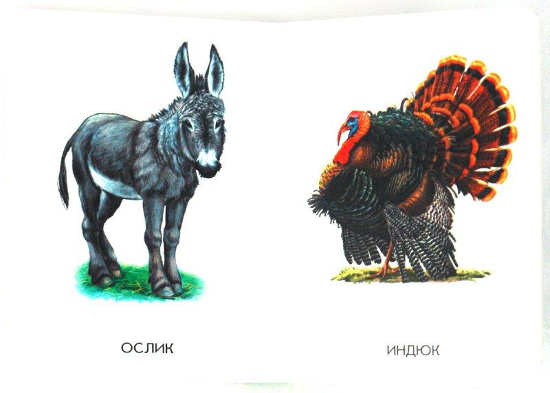 Иллюстрация 1 из 21 для 22 картинки: Домашние животные   Лабиринт - книги. Источник: Лабиринт