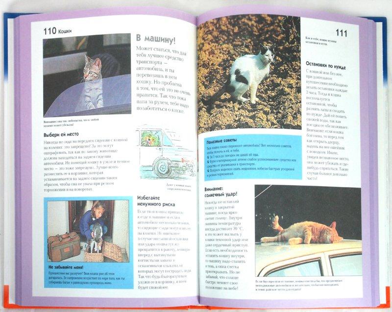 Иллюстрация 1 из 6 для Кошки - Стефан Фраттини | Лабиринт - книги. Источник: Лабиринт