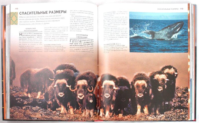 Иллюстрация 1 из 15 для 1000 чудес природы | Лабиринт - книги. Источник: Лабиринт