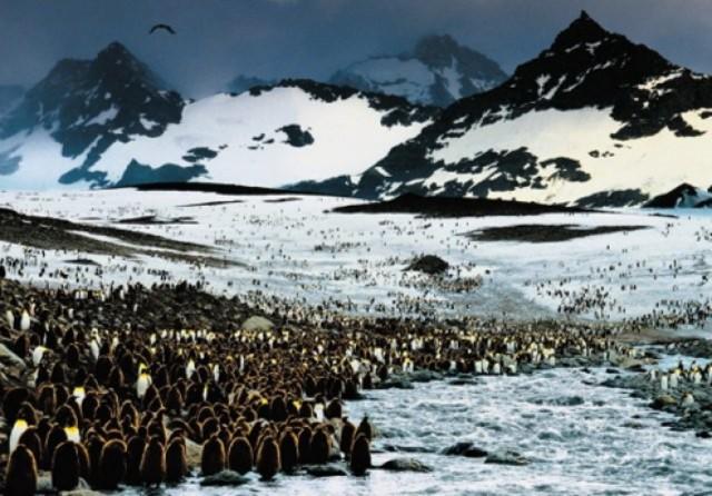 Иллюстрация 1 из 5 для Penguin | Лабиринт - книги. Источник: Лабиринт