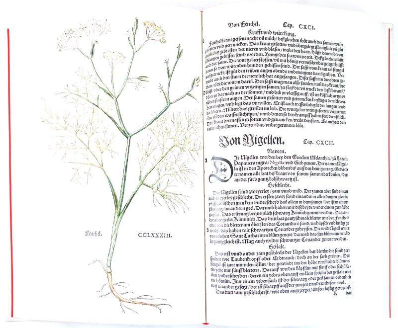 Иллюстрация 1 из 6 для The New Herbal of 1543 - Leonhart Fuchs | Лабиринт - книги. Источник: Лабиринт