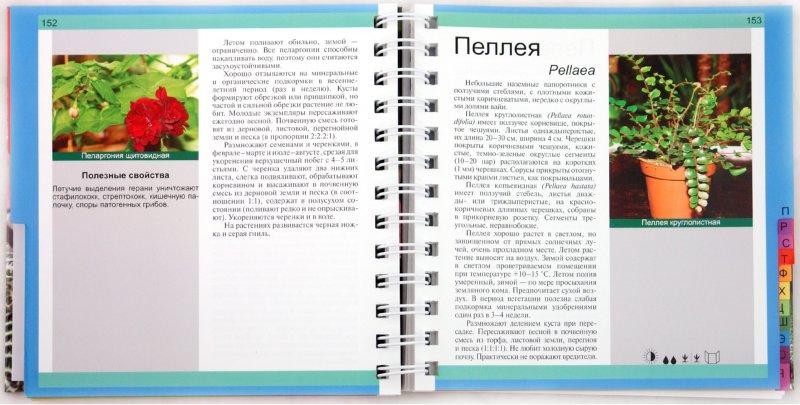 Иллюстрация 1 из 15 для Комнатные растения - Князева, Князева | Лабиринт - книги. Источник: Лабиринт
