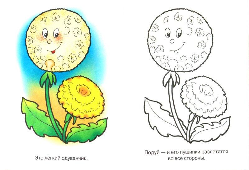 раскраска для малышей цветы синеглазый василек