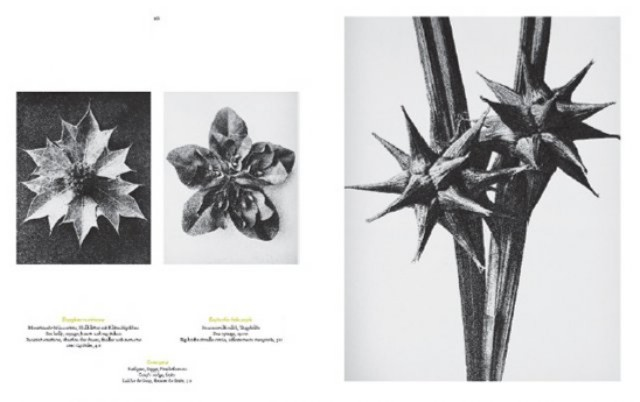 Иллюстрация 1 из 7 для Karl Blossfeldt. The complete published work - Hans Adam | Лабиринт - книги. Источник: Лабиринт