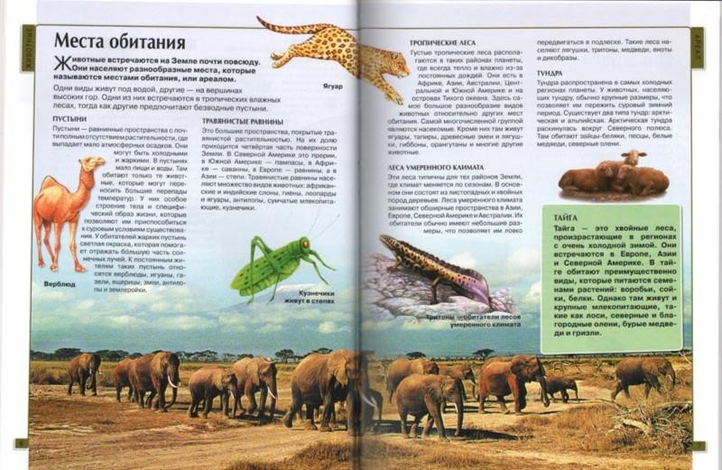 Иллюстрация 1 из 32 для Калейдоскоп знаний. Животные | Лабиринт - книги. Источник: Лабиринт