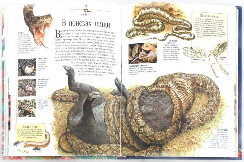 Иллюстрация 1 из 25 для Всё о животных - больших и маленьких. Детская энциклопедия | Лабиринт - книги. Источник: Лабиринт