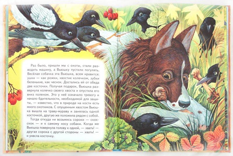 Иллюстрация 1 из 35 для Большая птичья книга | Лабиринт - книги. Источник: Лабиринт