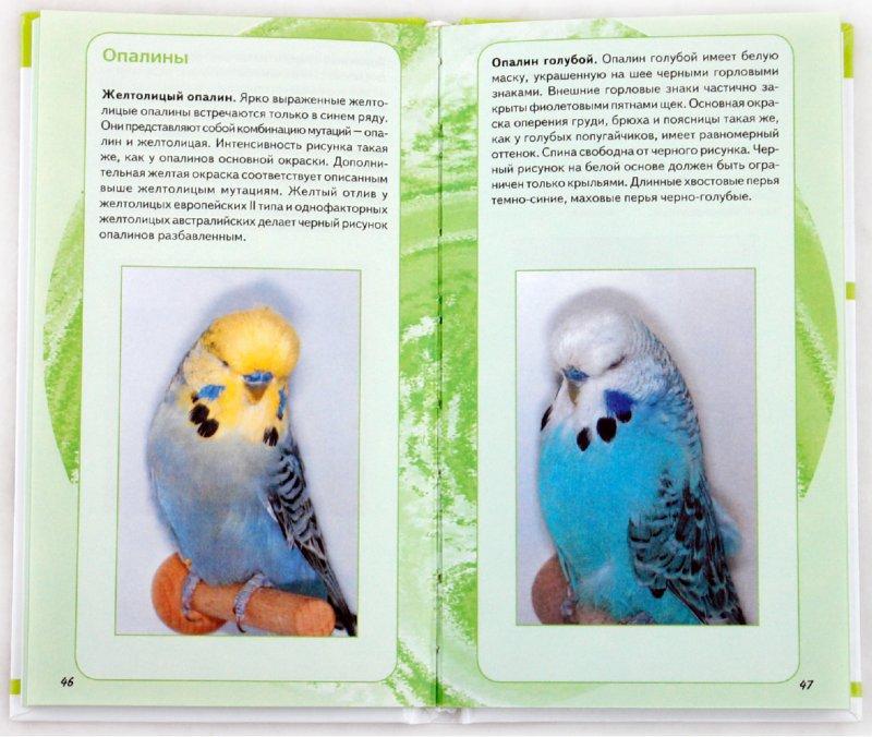 Иллюстрация 1 из 8 для Самые популярные волнистые попугайчики - Тео Винс | Лабиринт - книги. Источник: Лабиринт