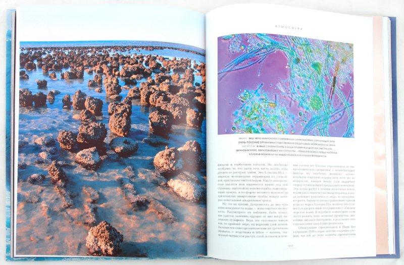 Иллюстрация 1 из 16 для Земля: Настоящая жизнь планеты - Стюарт, Линч | Лабиринт - книги. Источник: Лабиринт