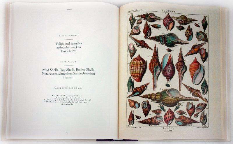 Иллюстрация 1 из 13 для Shell - Muscheln - Coquillages - Carpita, Willmann, Willmann | Лабиринт - книги. Источник: Лабиринт