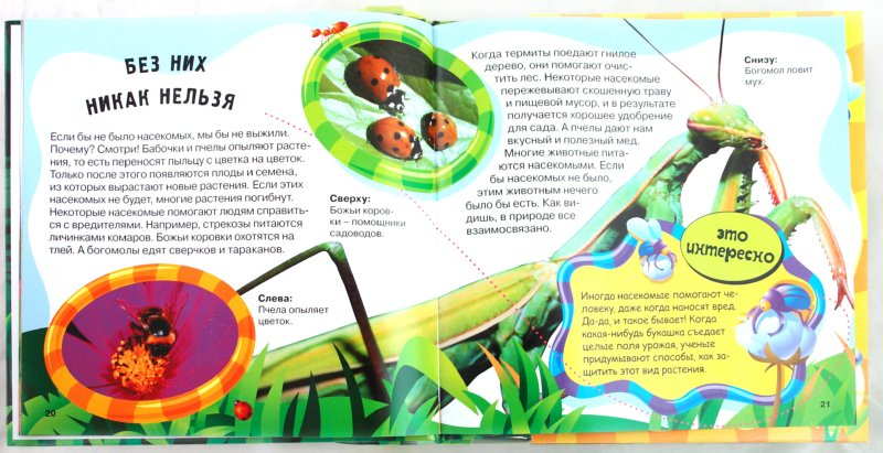 Иллюстрация 1 из 16 для В мире жуков и пауков - Ольга Литовинска | Лабиринт - книги. Источник: Лабиринт