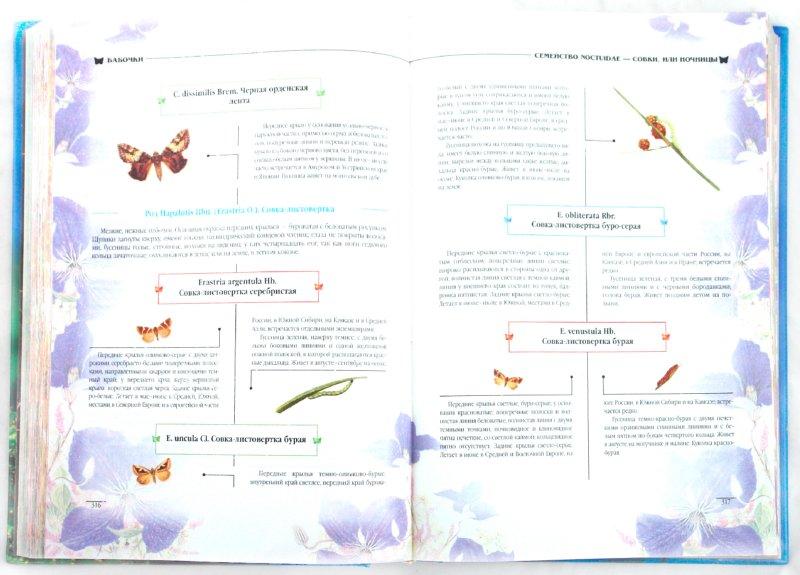 Иллюстрация 1 из 26 для Атлас бабочек и гусениц. Места обитания. Физические характеристики. Поведение. Размножение - Карл Ламперт | Лабиринт - книги. Источник: Лабиринт