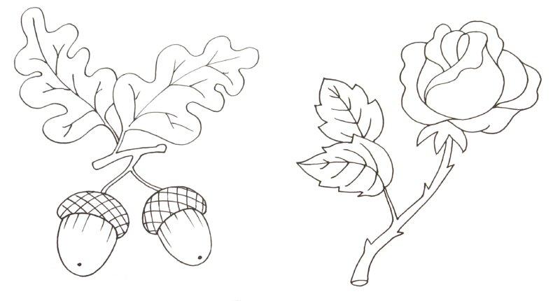 Иллюстрация 1 из 10 для Что растет вокруг | Лабиринт - книги. Источник: Лабиринт