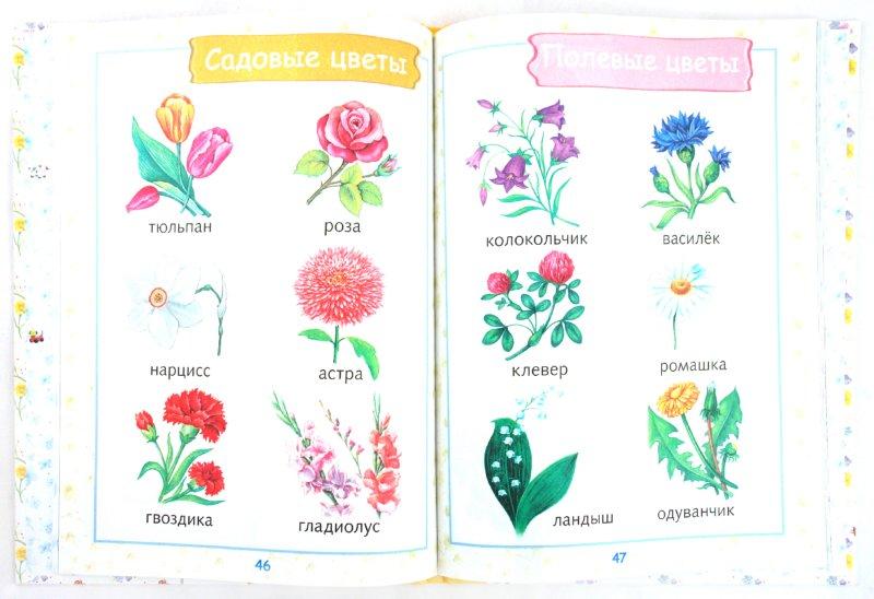 Иллюстрация 1 из 45 для Первая книга малыша. Энциклопедия для детей от 6 месяцев и старше | Лабиринт - книги. Источник: Лабиринт